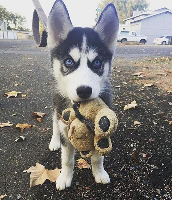 Hond-love-knuffelbeer