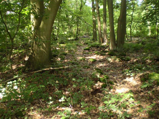 16-plaatje van ons bos 2007