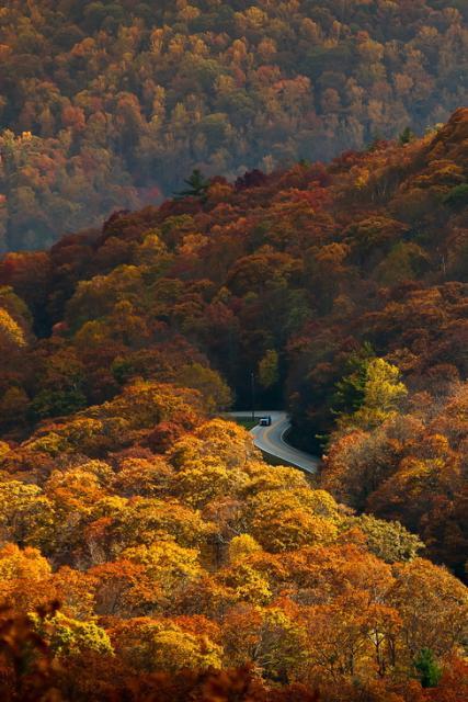 Herfst in het woud